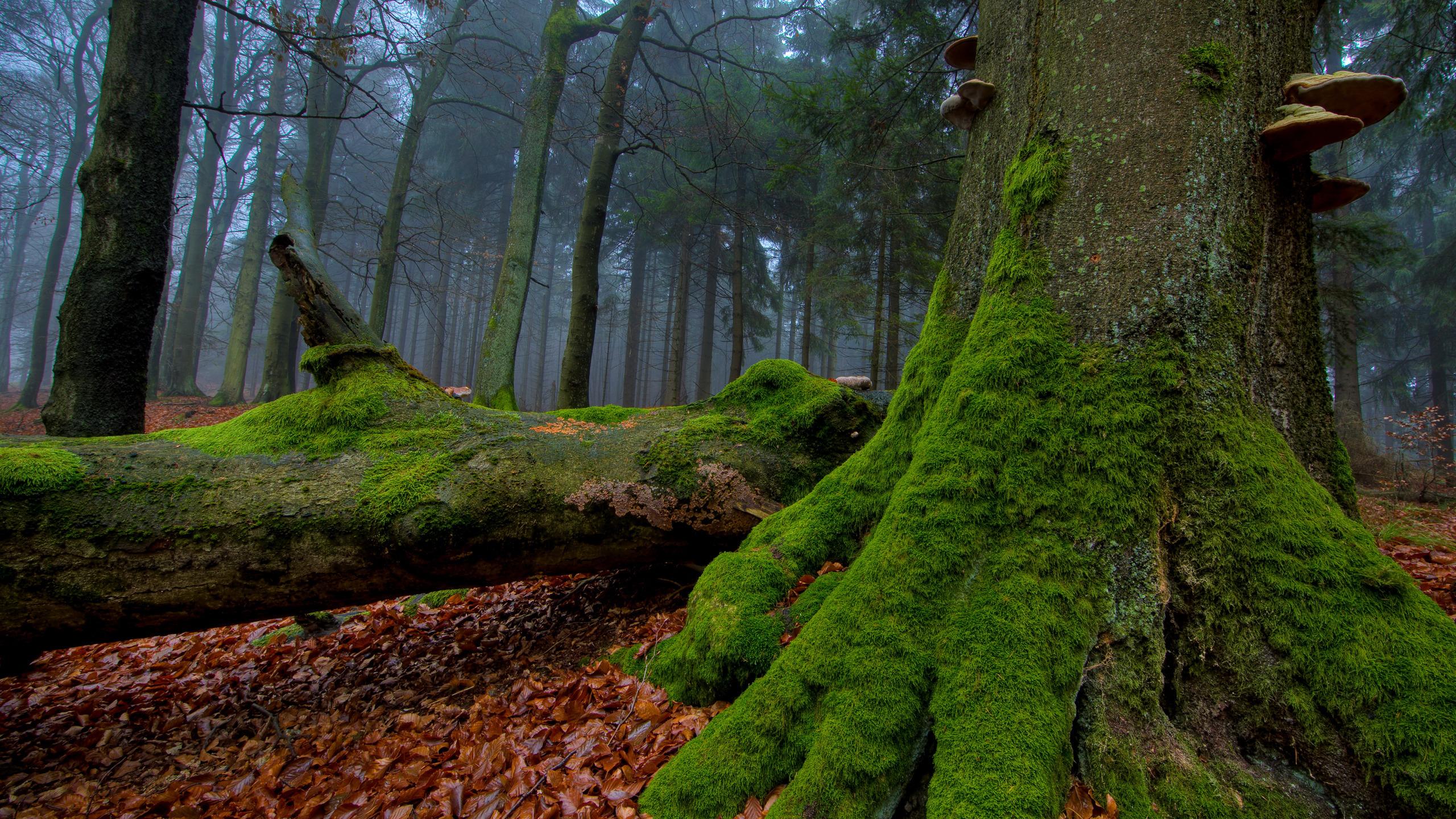 Мъх на дърво