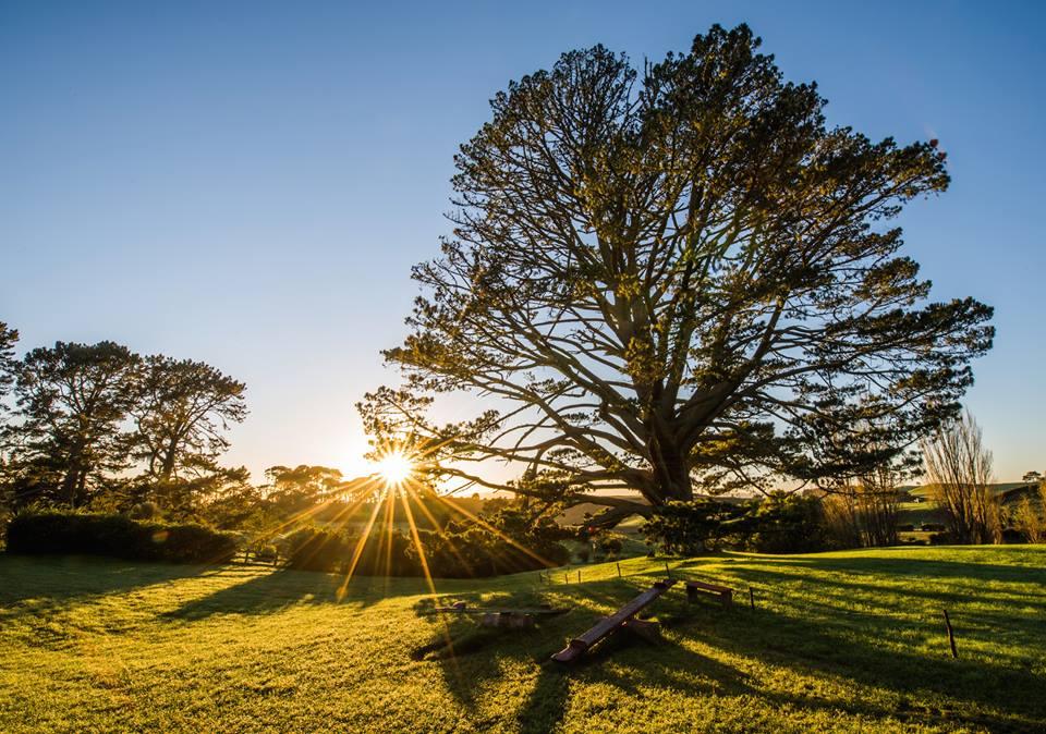 празничното дърво